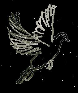 fågel-4036